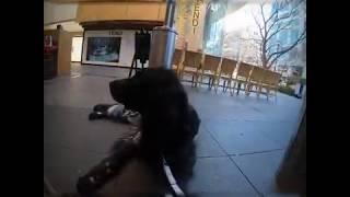 大型犬、ラージミュンスターレンダーのボン爺ちゃんと表参道の人気カフ...