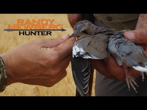 Randy Newberg, Hunting - Dove Hunting Episode In Yuma, Arizona