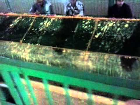 venadu dargah (sheik dawood shah valli baba)