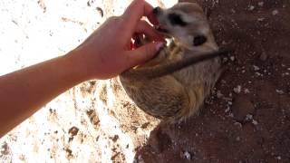 [HD] Łaskotanie egzotycznego zwierzęcia