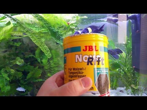 FütterungTropheus duboisi mit JBL Spirulina premium vs. Novo Rift