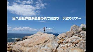 屋久島世界自然遺産の森で川遊び・沢登りツアー