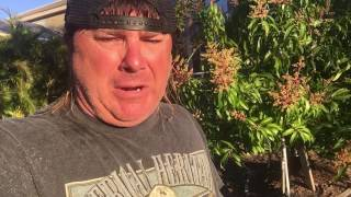 Donnie Baker Blasts the Boycott of the movie A Dog