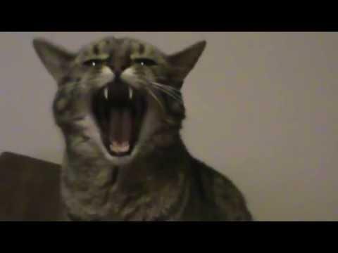 Metal Cat