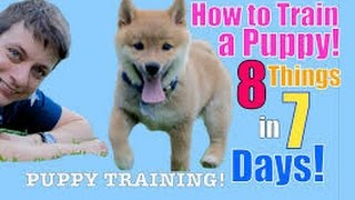 How to train Puppy to walk on a leash puppies that stop and are scared or stubborn