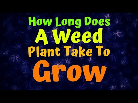 How Long Does A Weed Plant Take To Grow