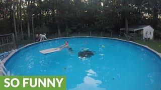 Puppy loves walking around rim of pool