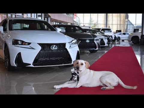 Edmonton Jobs - Lexus of Edmonton now hiring