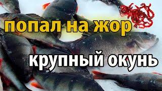 Темиртау Рыбалка Самаркандское водохранилище Теміртау Балық аулау Самарқанд су қоймасы Full HD