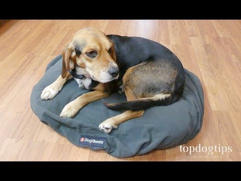 dogsheetz-waterproof-dog-bed-covers-review