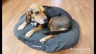 DogSheetz Waterproof Dog Bed Covers Review