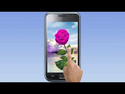 Rose. Magic Touch  Live wallpaper.