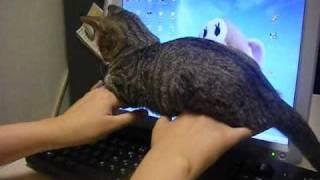 キーボードに邪魔しに来る子猫 thumbnail