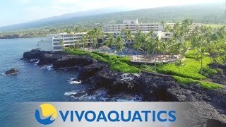 VivoAquatics installation at Sheraton Kona