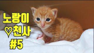 《길고양이 노랑이와 천사 이야기 #5》고양이 아기 그루밍, kitten, stray cat, 아깽이, 길고양이 새끼 구조, 고양이 유튜버, 미묘 고양이, 고양이육아일기,모성애고양이