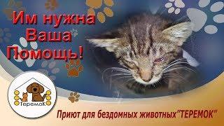 """Приют Для Бездомных Животных """"Теремок"""": Как с ними могли так поступить?"""
