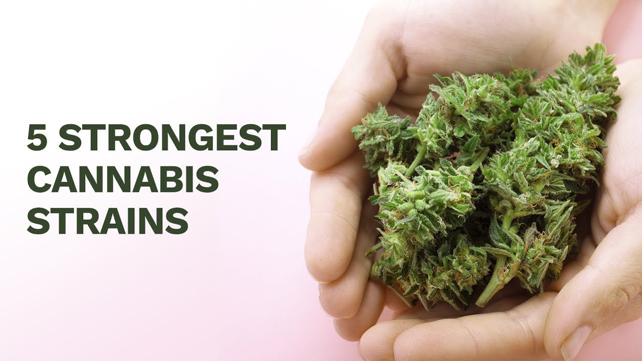 5 Strongest Cannabis Strains