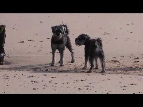 Chariots of Fire - A short film for Norwood's Pawdance Festival