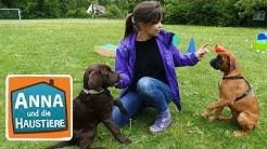 Ein Tag in der Hundeschule | Information für Kinder | Anna und die Haustiere | Spezial