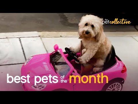 Best Pets of the Month | September 2020
