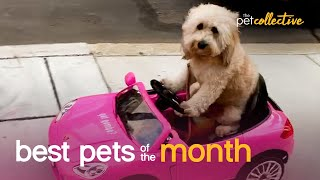 Best Pets of the Month (September 2020) | The Pet Collective