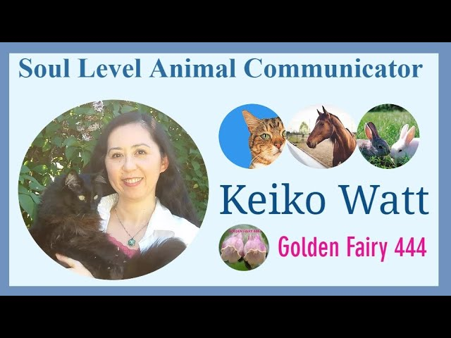 YouTube - What is animal communication