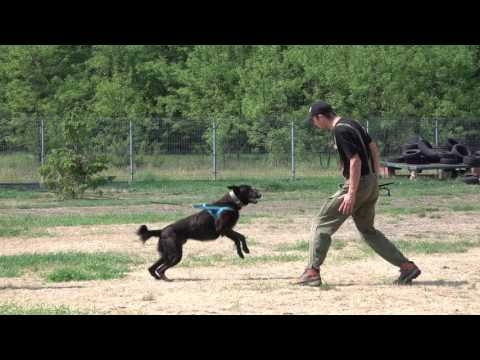 Gary Dutch Shepherd   Protection inside and outside