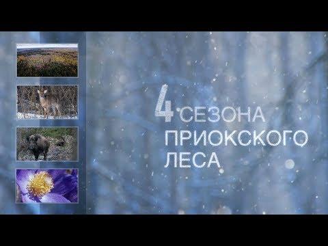 4 сезона Приокского леса (Приокско-Террасный заповедник)