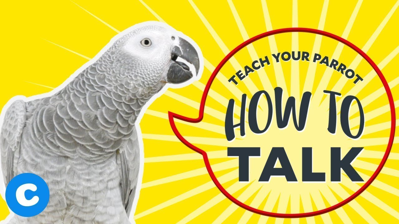 Download Teach Your Parrot How to Talk | Chewy