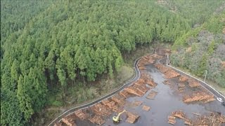A New Era for Japan's Forests thumbnail