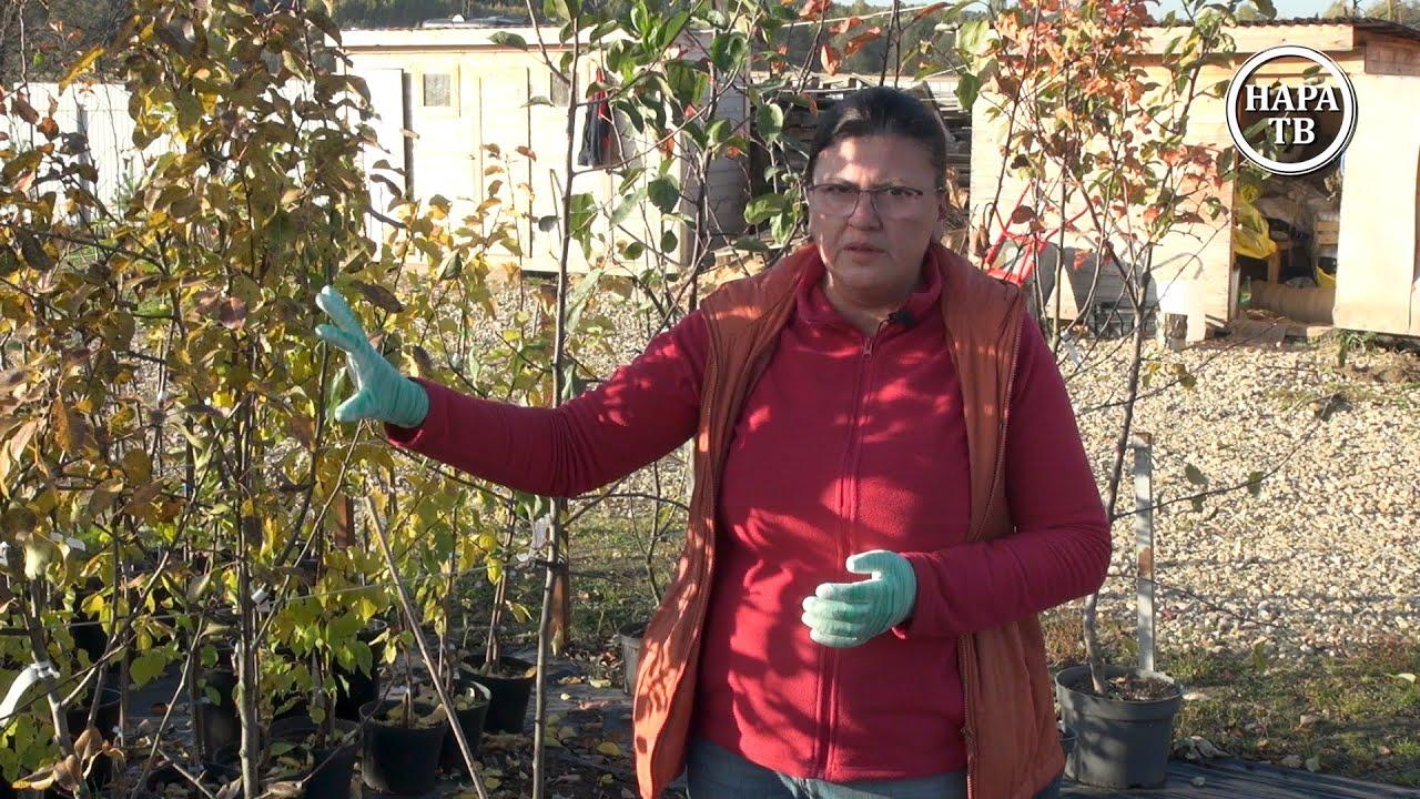 «Советы садоводам», выпуск 6