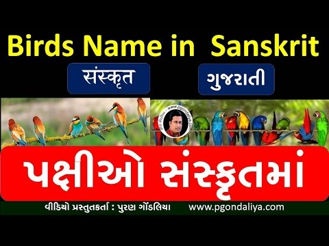 पक्षियों के संस्कृत नाम |Birds Name With Picture In Sanskrit | Learn Sanskrit @Puran Gondaliya