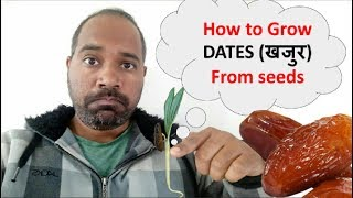 How to Grow Dates Palm from seeds setp by step Part 1,  खजुर के बिज से पौधा उगाए