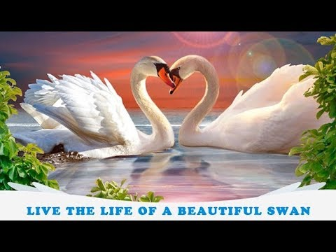 🐦Swan Simulator 3D - City Bird Fly Game-Offered By Virtual Animals World-Android