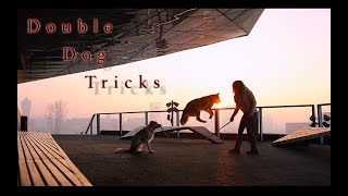 Double Dog Tricks by MADzone Border Collies !