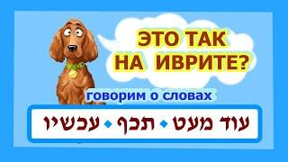 Слово «СЕЙЧАС» это עכשיו (ахшав) или  תכף (тэхэф)? (из цикла «Так это на иврите / ככה זה בעברית»)