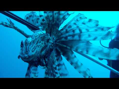 BIOS-Lionfish Hunting!
