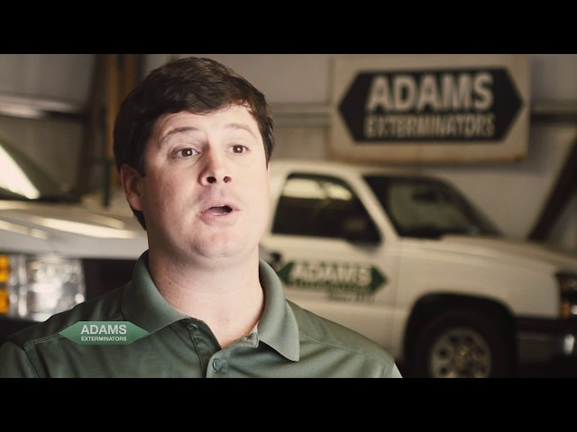 Adams Exterminators - Bed Bugs