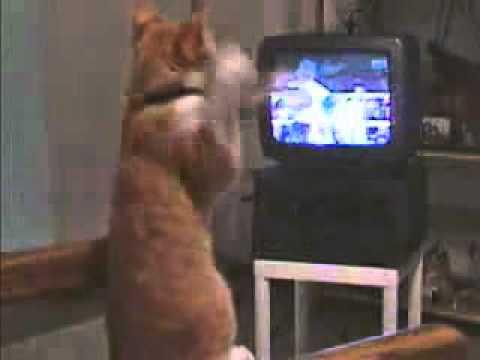Gato Jugando Xbox Kinect