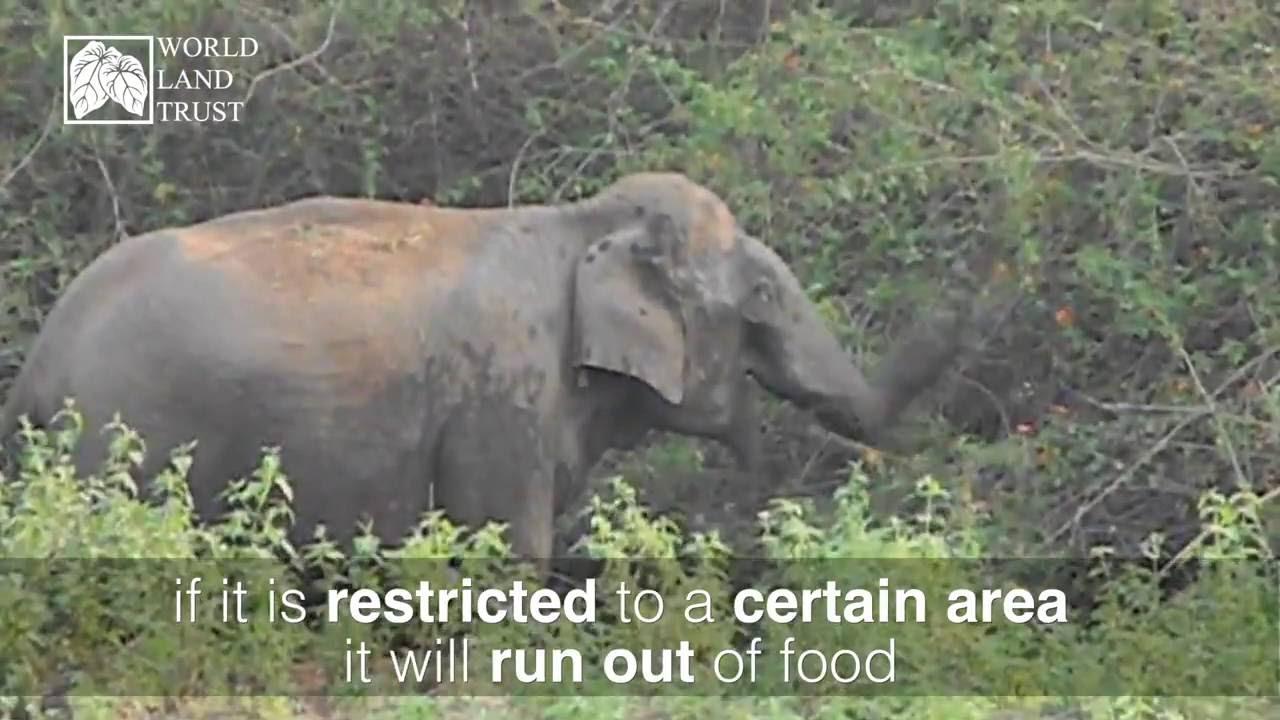 How to describe an elephant