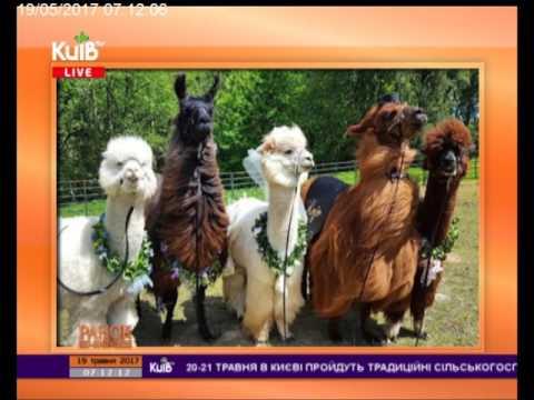 Телеканал Київ: 19.05.17 Ранок по-київськи
