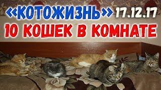 10 котов в моей комнате ❖ КОТОЖИЗНЬ 17.12.2017