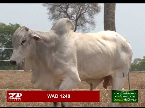 LOTE 09 - WAD 1248