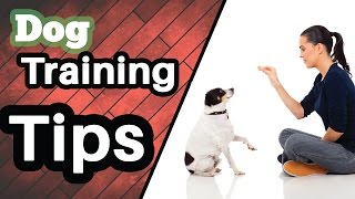 Dog Training Tips || Most Secret Dog Training Tips with Free E-Book  [HD]