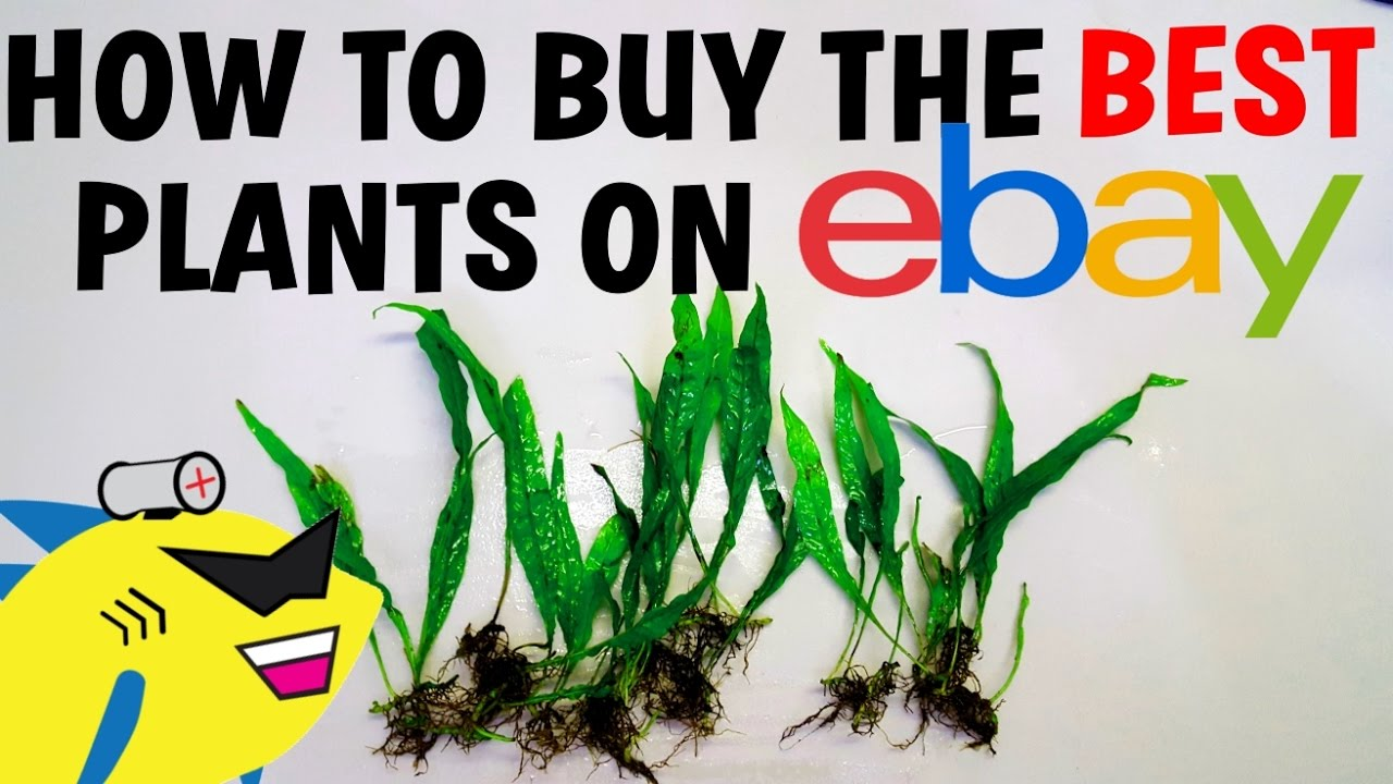 How To Buy The Best Aquarium Plants Online  Ebay And More