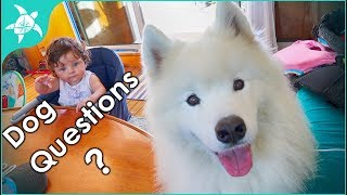 Living on a Boat with a Dog. What is it like? How did you train the dog? Where does she..