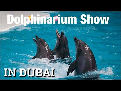 Dolphin & Seal Show | Dubai Dolphinarium | Uae vlog 2021 |