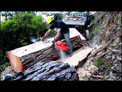 Felling a big pine tree & milling slabs with a portable Chainsaw Mill