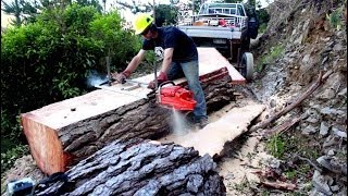 Repeat youtube video Felling a big pine tree & milling slabs with a Chainsaw Mill