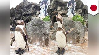 Penguin loves anime: Otaku penguin departs life with manga waifu at his side - TomoNews